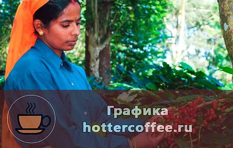 Индийский кофе