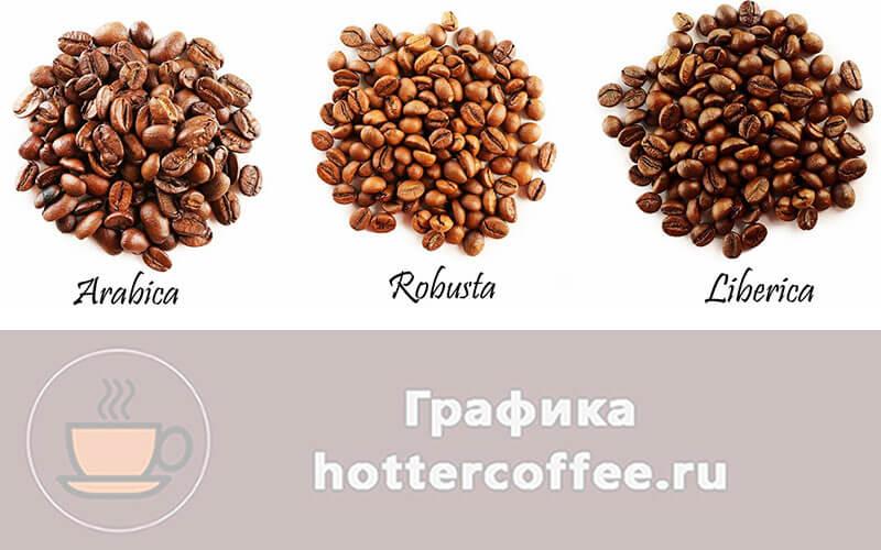 Виды кофе - арабика, либерика, робуста